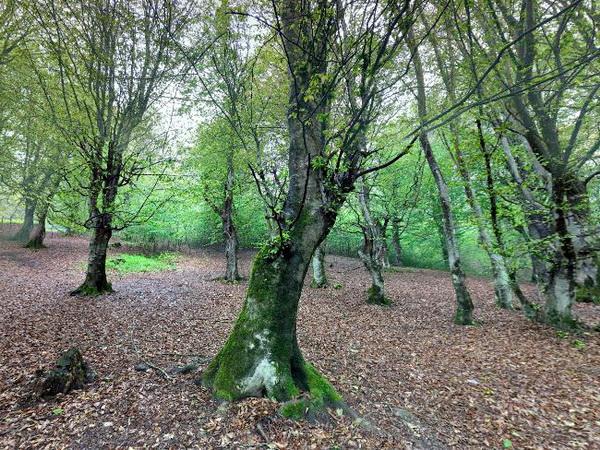 جنگل طویدره