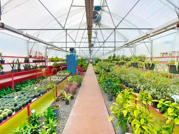 نمایشگاه گل و گیاه کلاردشت در لاهو